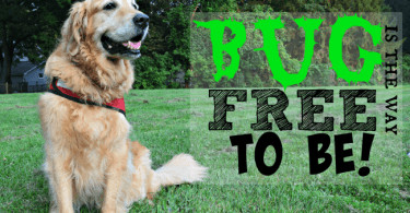 MyDogLikes reviews Dr. Harvey's line of Natural Bug Repellent products for dogs!