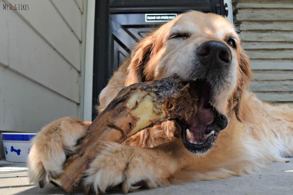 Nothing Harley enjoys more than some large dog bones!