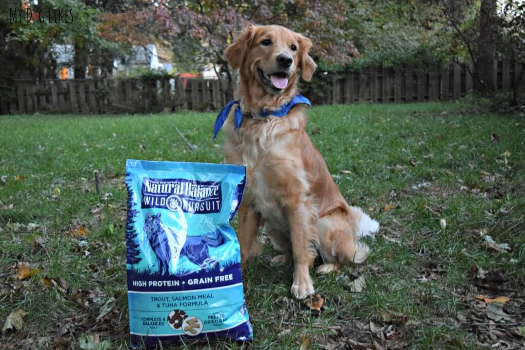 Wild Pursuit dog food is designed to mimic a dogs ancestral diet - high protein and grain free.