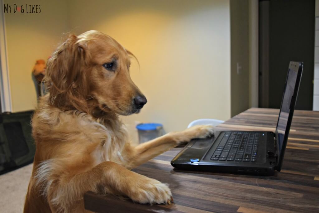 Charlie on the computer trying to find some deals on Full Moon Dog Treats!