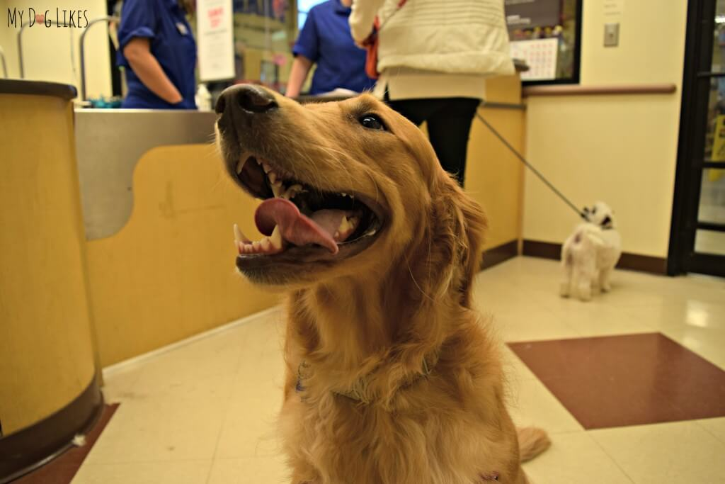 Charlie's PetSmart Grooming Services included a beautiful teeth cleaning!