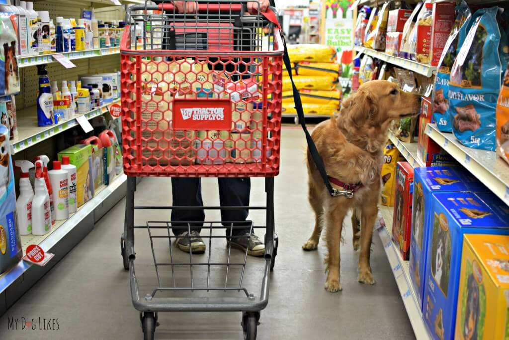 Charlie browsing the dog treat aisle at Tractor Supply