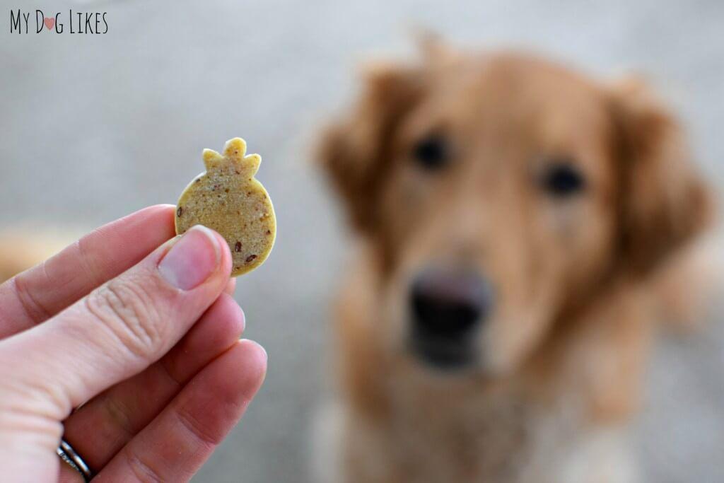 About to taste test a Farmyard Friends dog treat