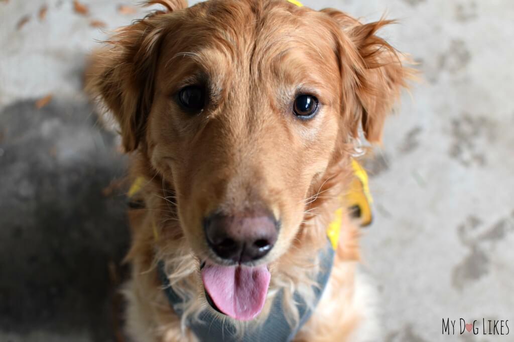Happy puppy Charlie!