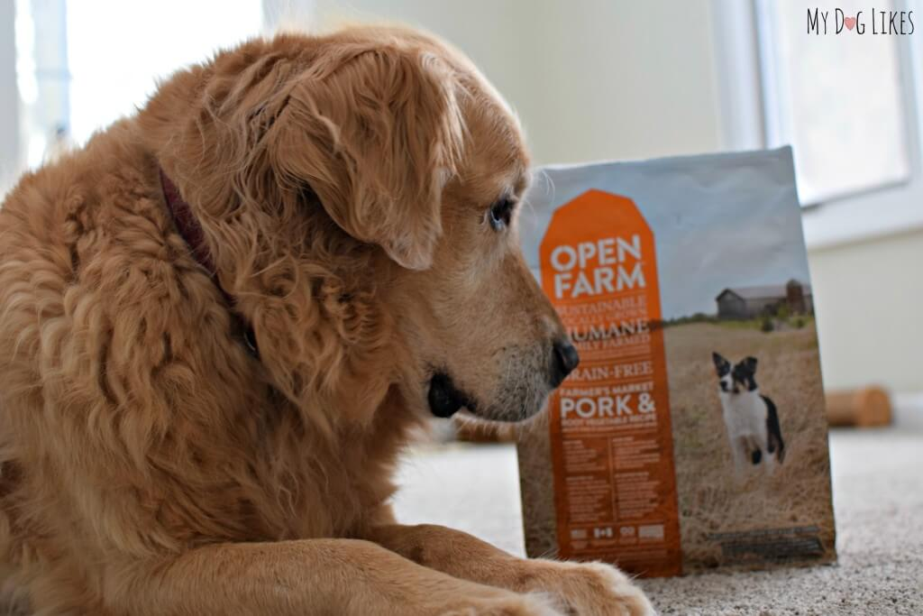 Harley checking out Open Farm's grain free dog food
