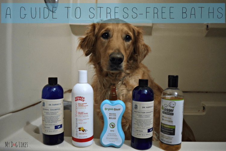 Don't miss our step by step instructions on how to bathe a dog.