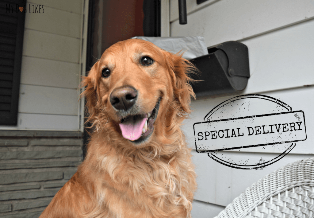 Looks like Charlie has a special delivery in the mail!