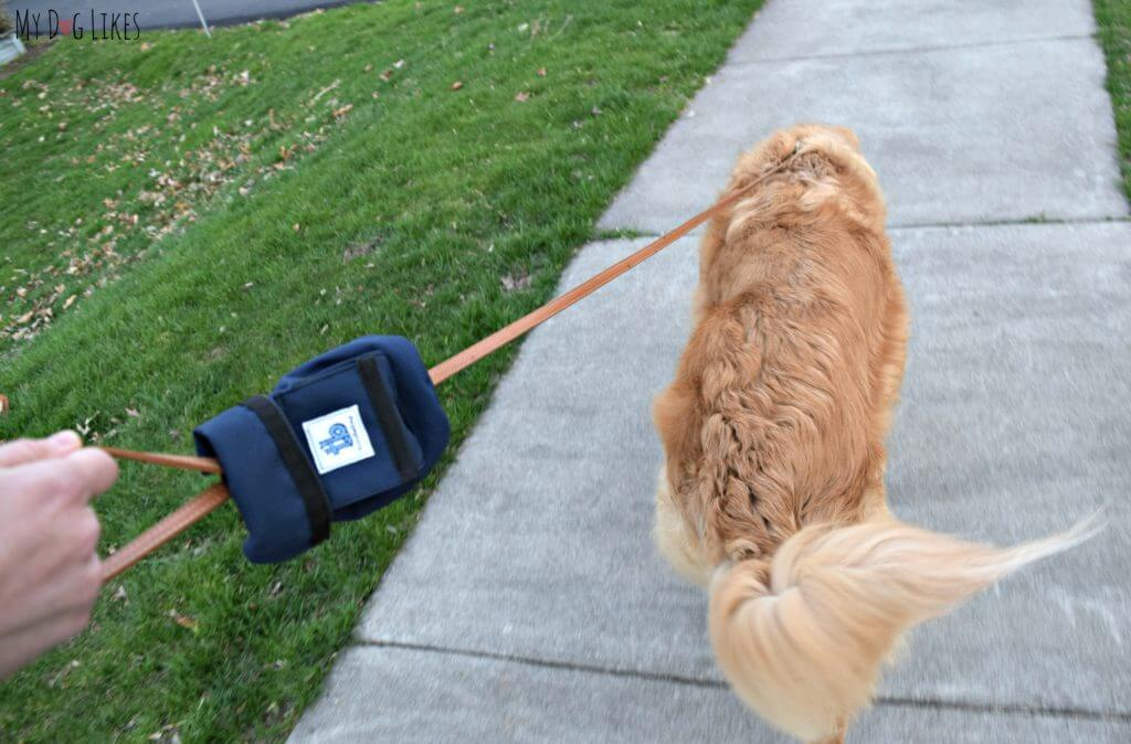 MyDogLikes reviews the turdlebag - dog walking accessory