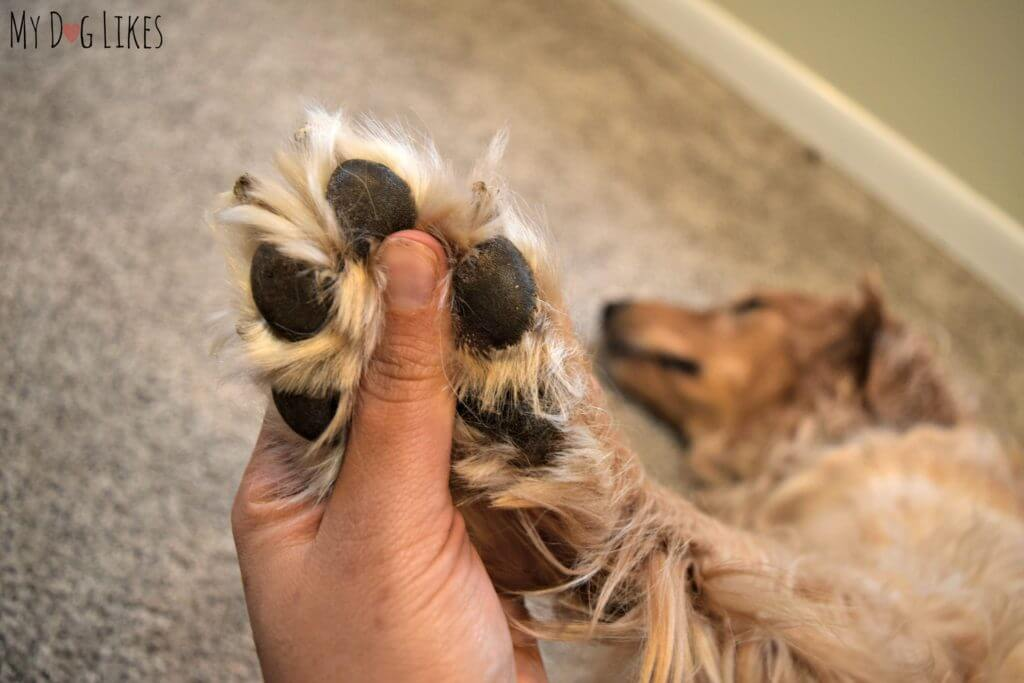 Learn how to trim a dog's nails and other dog ownership skills at MyDogLikes