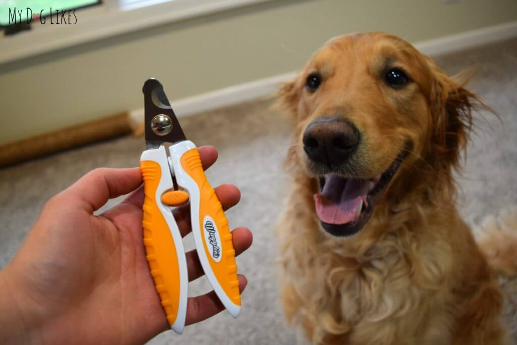 Showing off the comfort grip of these Professional Dog Nail Trimmers