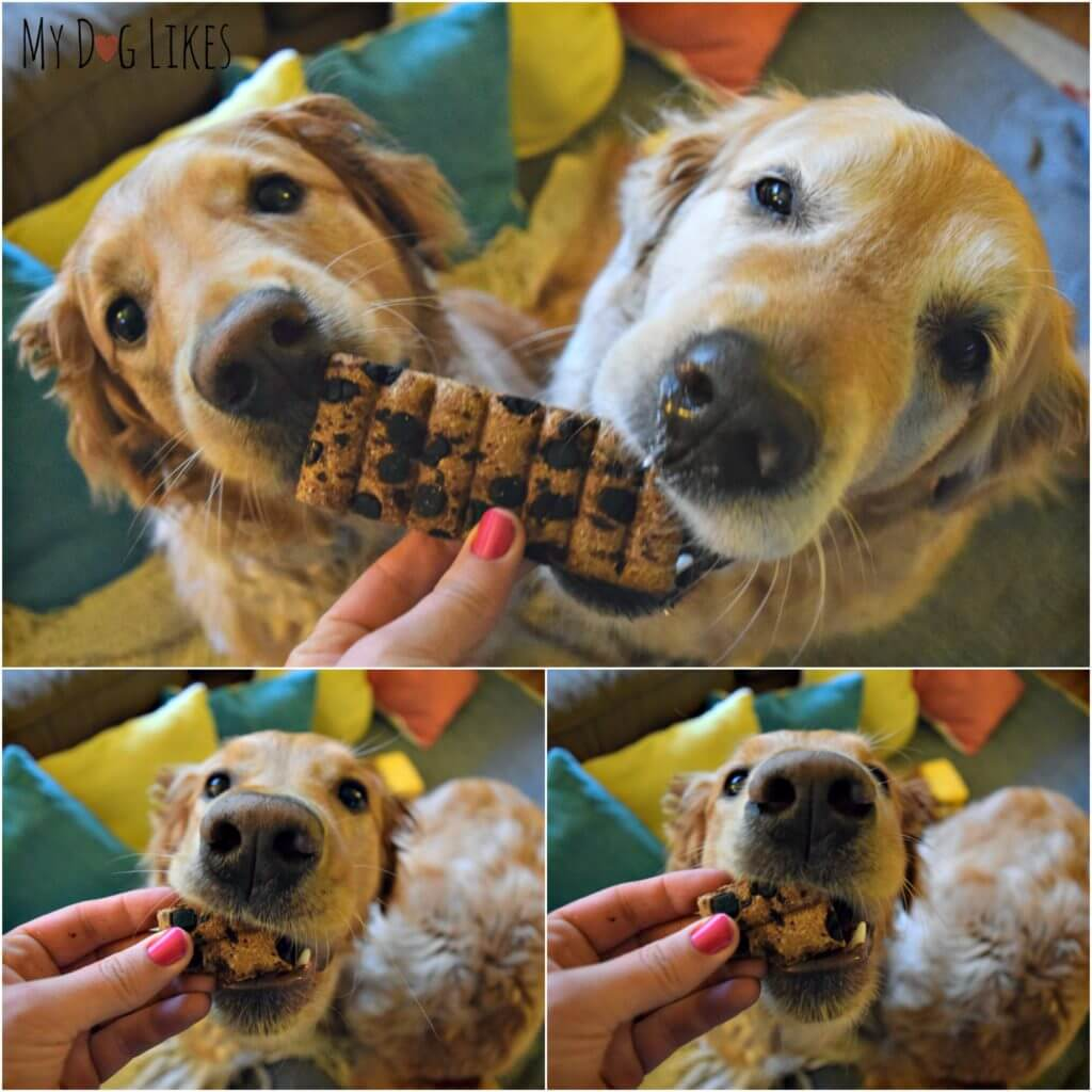 Harley and Charlie enjoying their candy bar for dogs