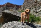 Learn how to Protect your Dogs Paws from High Temperatures