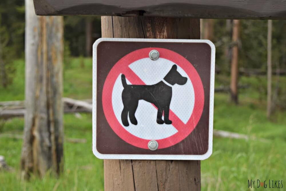 Dogs are not allowed on boardwalks or trails at Yellowstone