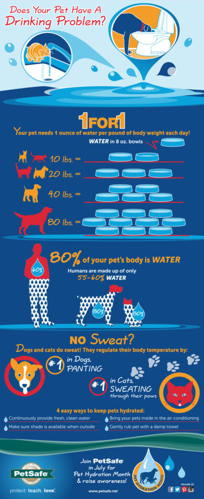 PetSafe Dog Hydration Infographic
