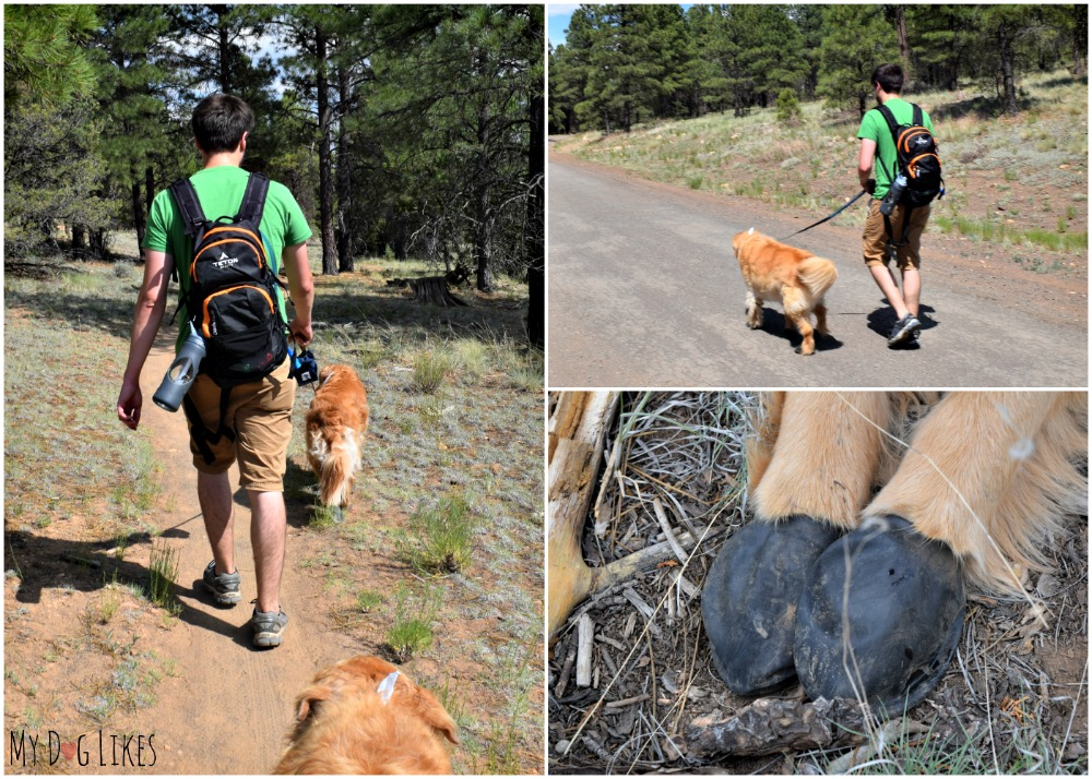 Hiking with pawz dog boots in Coconino National Forest