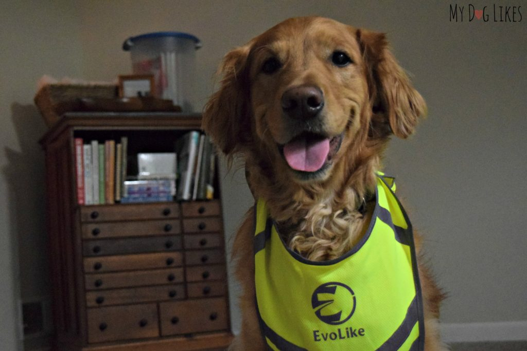 Charlie modeling our Evolike vest - intended for humans!