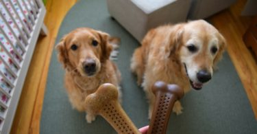Harley and Charlie are ready to get to work on their Flavorit Barkbone Review!
