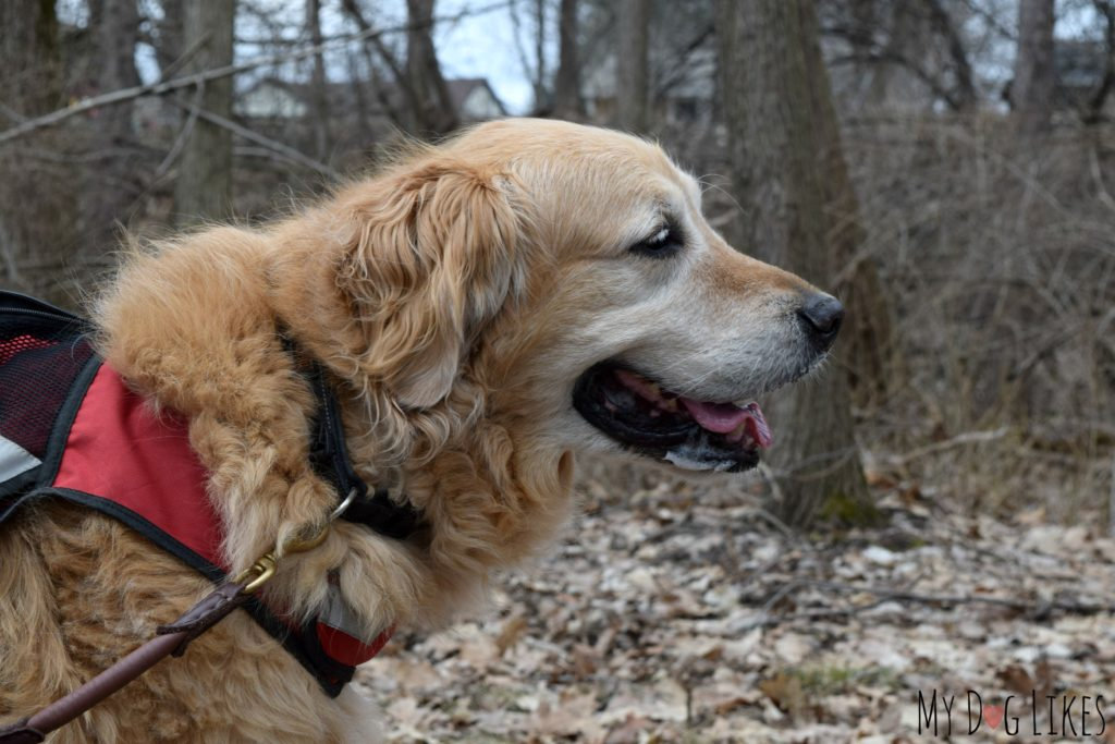 Turning Point is another great Rochester Park for a dog friendly hike!