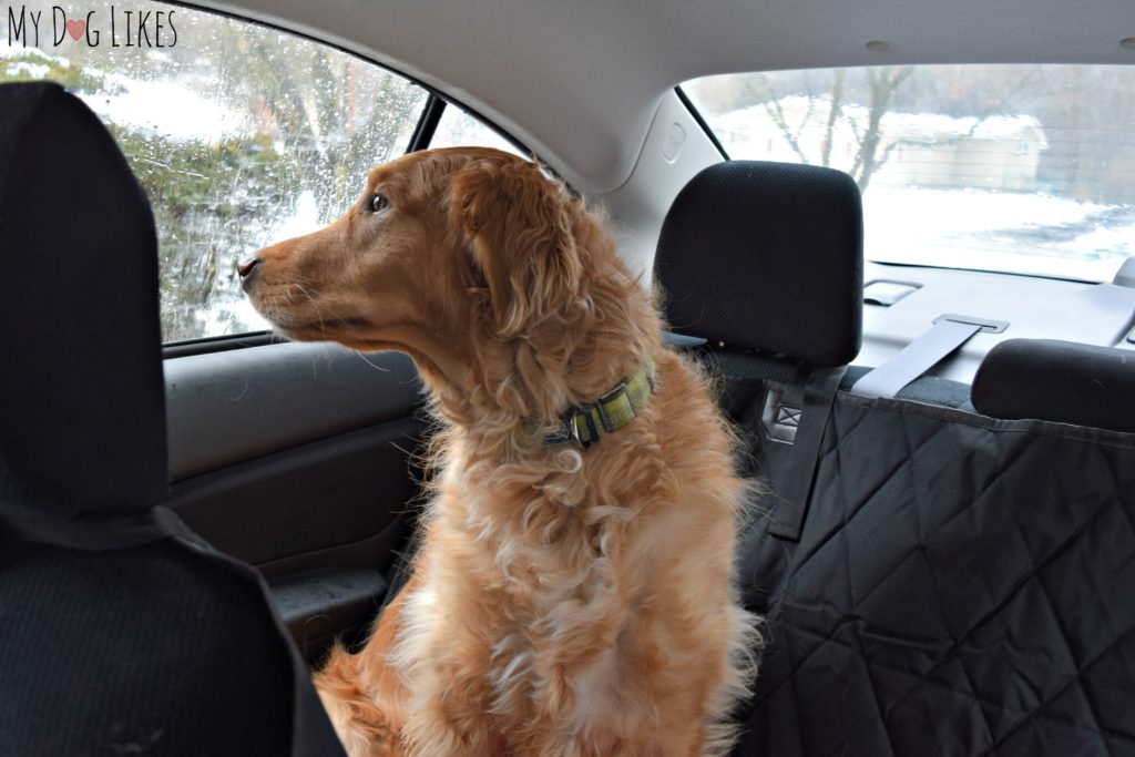 Testing out another bench seat cover for dogs - this one from Plush Paws