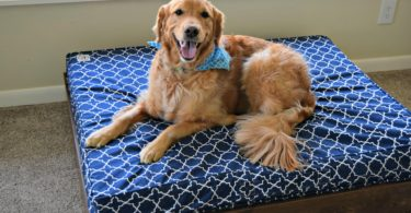 Charlie is thrilled with his new orthopedic bed for dogs!