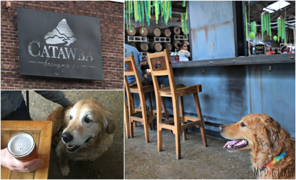 Drinks at Catawba Brewing in Asheville - where dogs are allowed INSIDE!