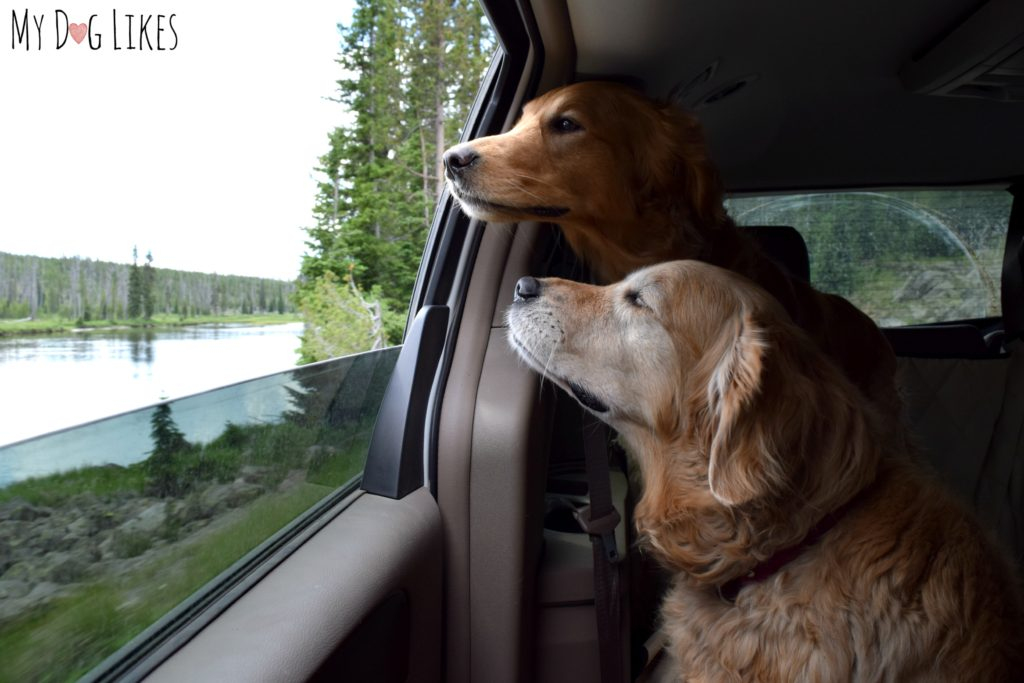 Dogs in Yellowstone - Driving the Grand Loop