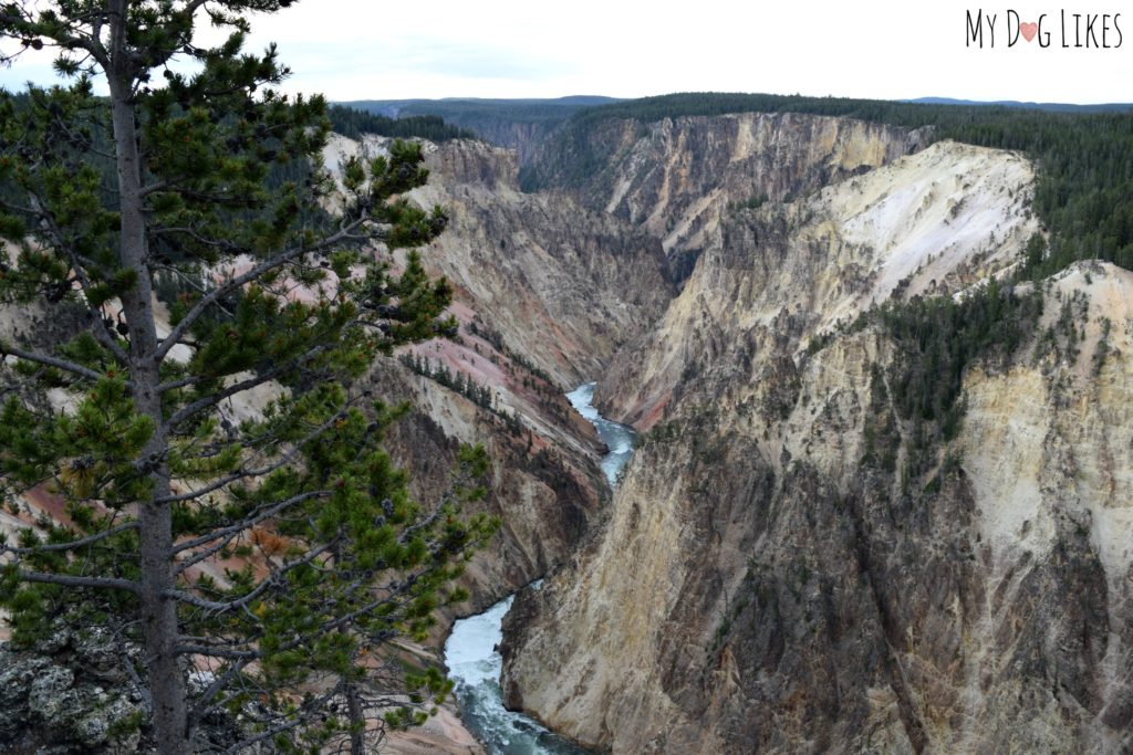 The Grand Canyone of the Yellowstone is between 800-1,200 feet deep and up to 4,000 feet across!