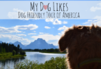 MyDogLikes 2017 Road Trip Home Page