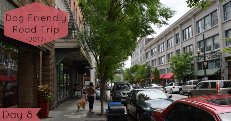 Downtown Asheville Dogs