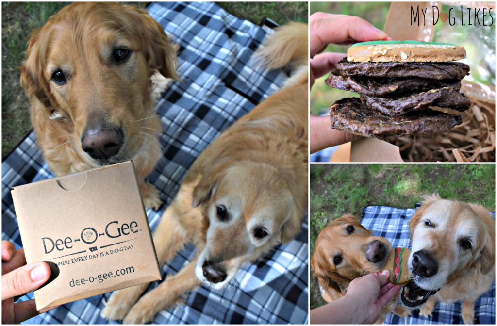 Harley and Charlie digging in to their dog hamburger from Dee-O-Gee
