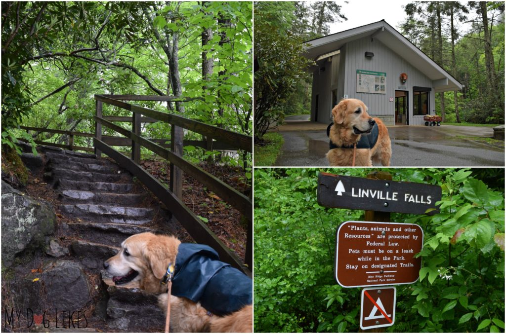 Hiking with our dog at Linville Falls in North Carolina