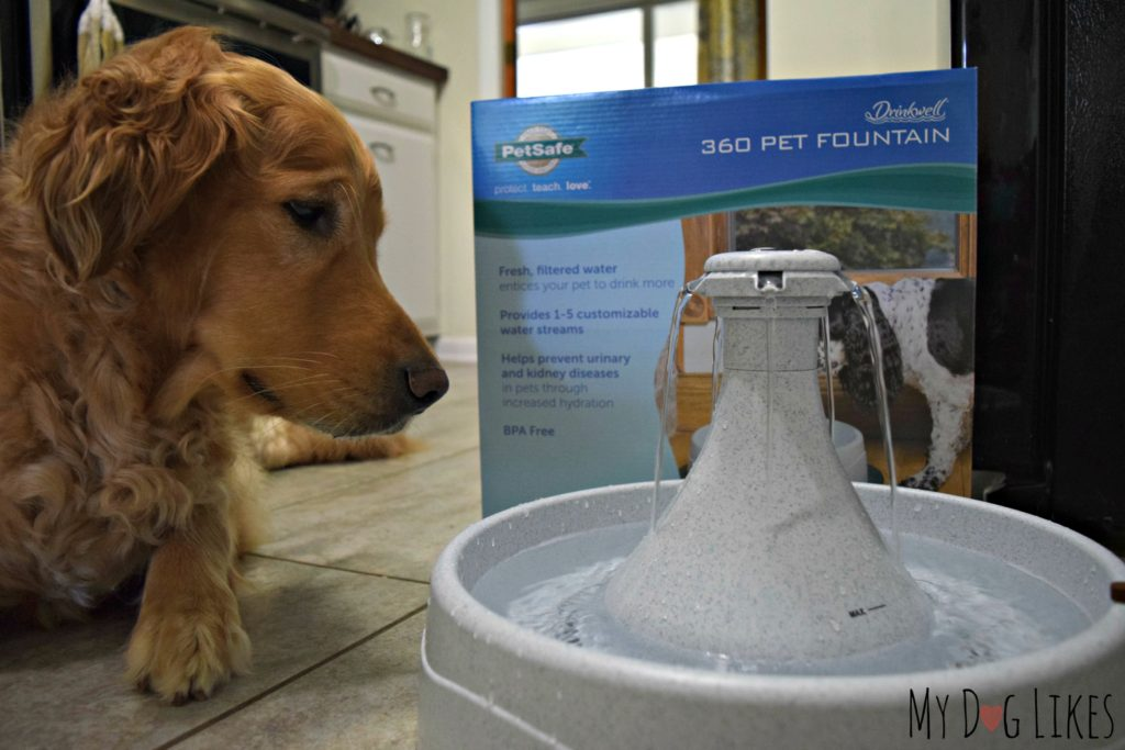 Drinkwell 360 Pet Fountain Review from MyDogLikes