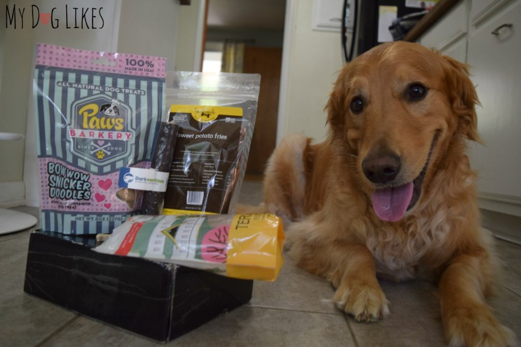 Taking a closer look at Prized Pet in our latest dog subscription box review