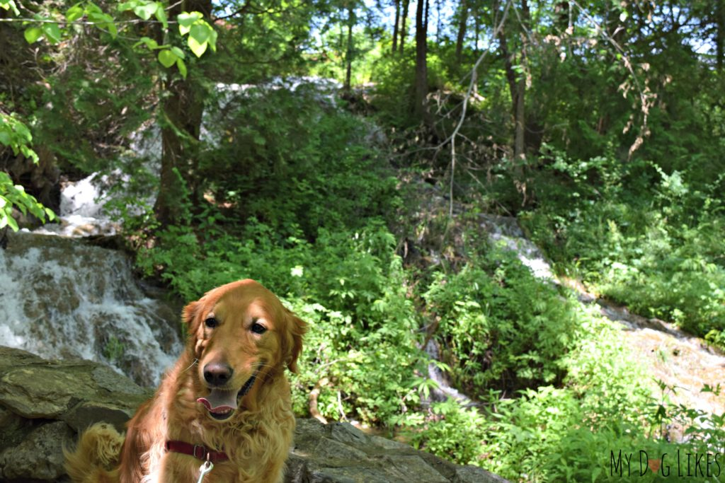 Posing by the waterfalls along the start of the Cedar Creek trail.
