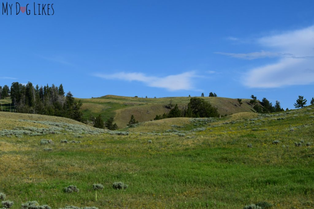 Sweeping alpine plains in Northern Yellowstone