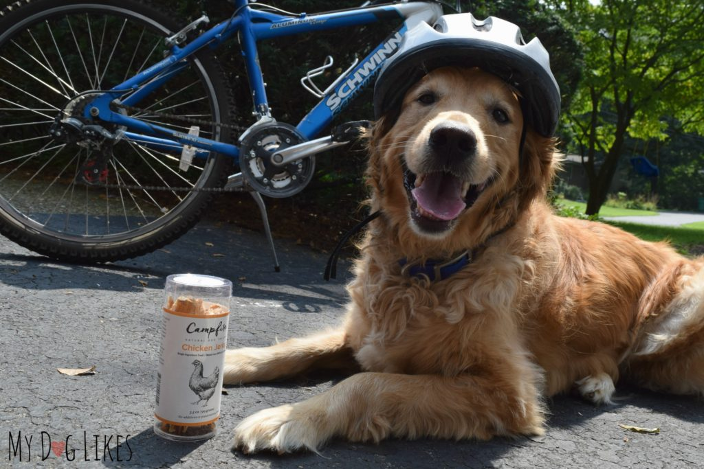Lean protein treats for active dogs