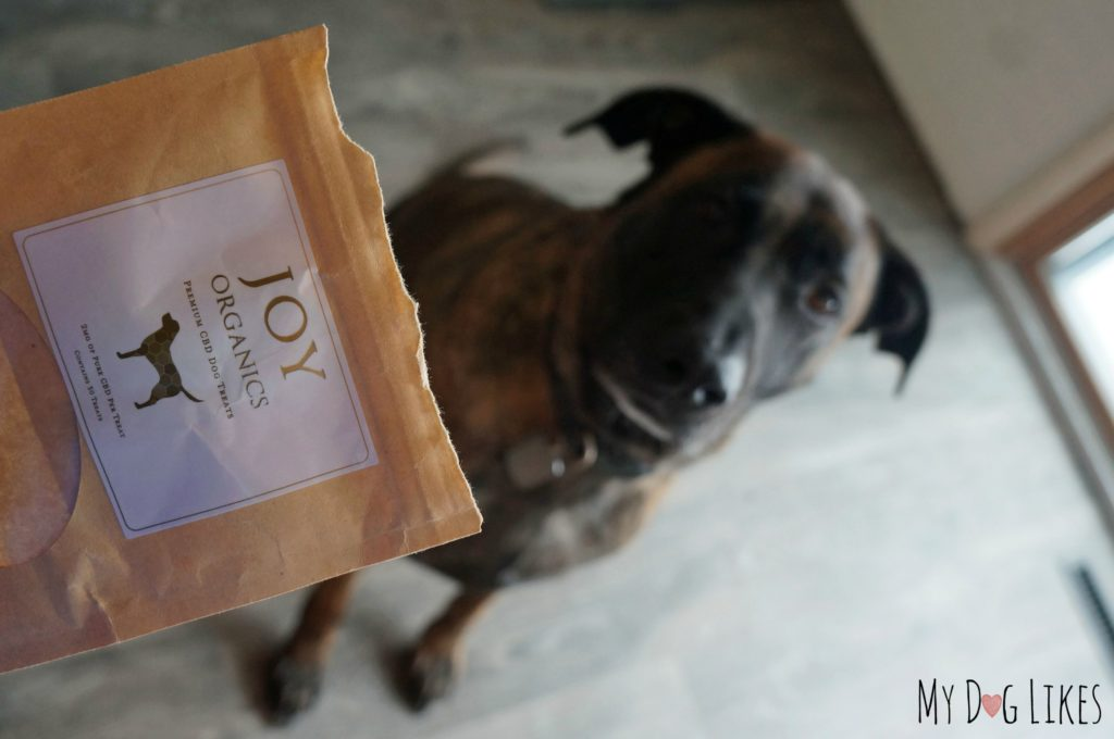 CBD Dog Treats Review