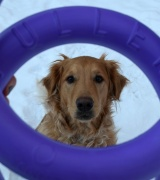 Puller Dog Toy