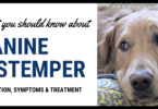 How do dogs get distemper?