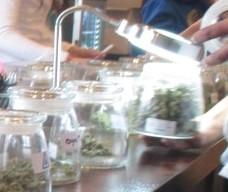 Cannabis Shopping 101