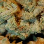 4 Best Strains for Marijuana Vacations