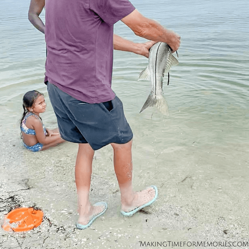 putting the Snook back into the water