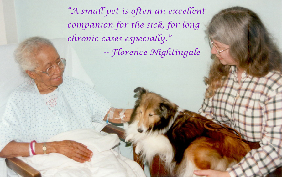 Therapy animals | Animals Helping People