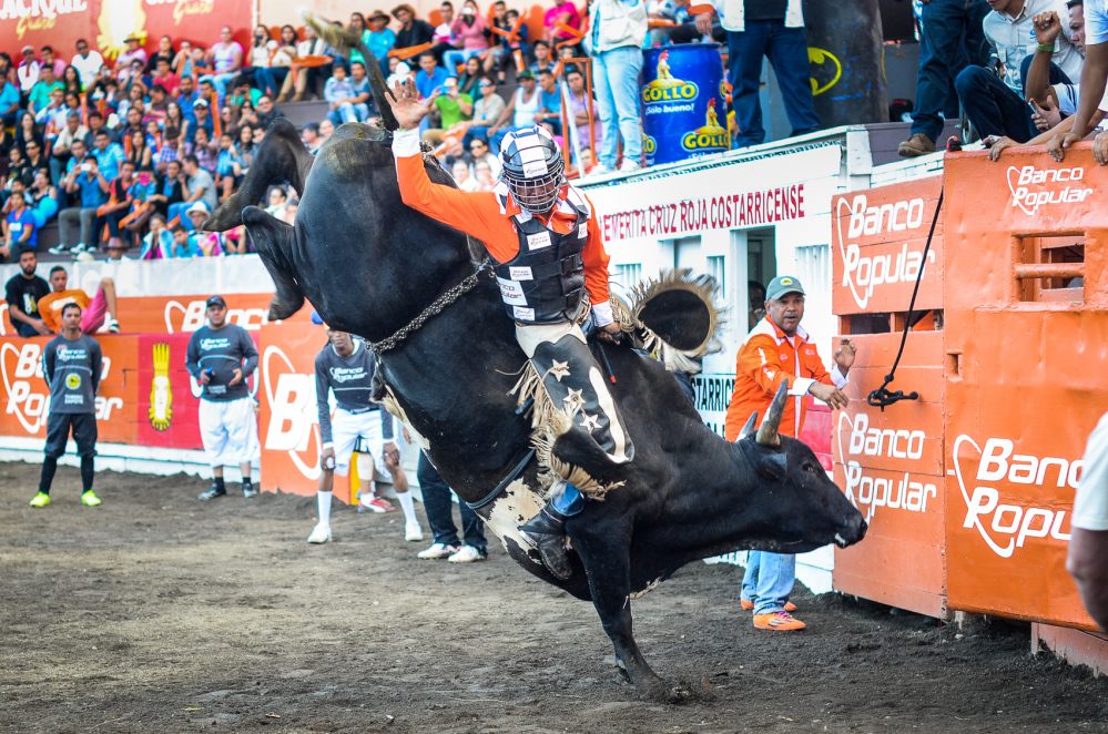 Riding bulls in Costa Rica