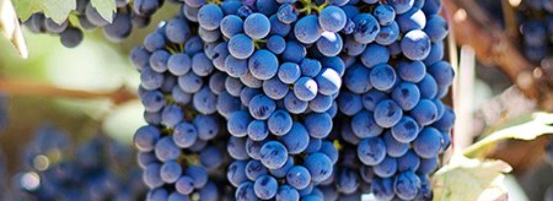Wine: Piedirosso IOVINE – Campania