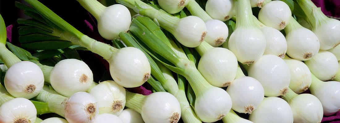 Seasonal Showcase: Walla Walla Sweet Onions