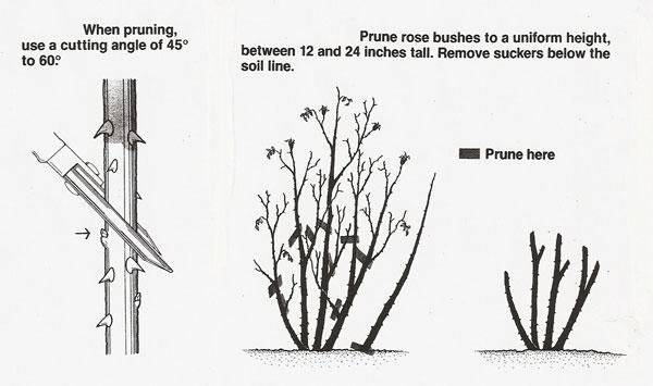 Pruning-Cut-3