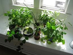 Houseplants, ID, Insects, Repotting, Etc @ Justice Center   Monroe   Wisconsin   United States