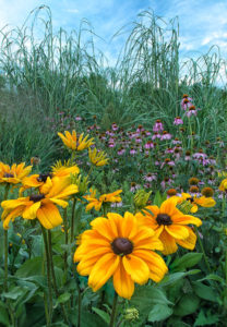 Fall Bounty 2015 by JAMES SCHOEDLER Category: Nature
