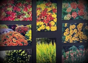 gardens-001